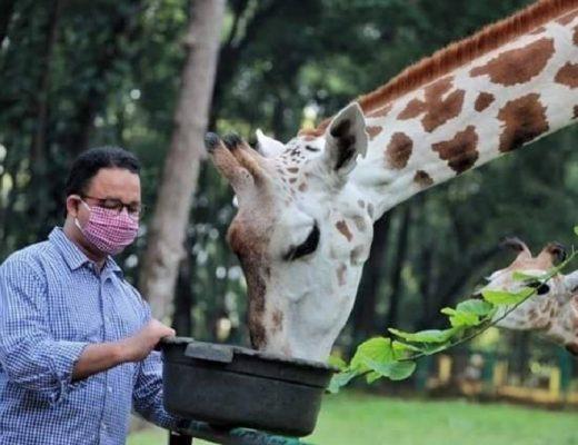 Keadaan Kebun Binatang Ragunan Selama Pandemi